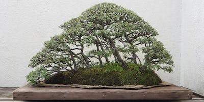 Australian Native Bonsai: Principles and Practices. Sunday 1 November 2020