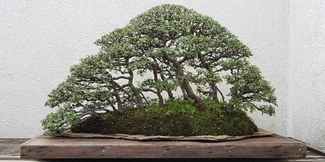 Australian Native Bonsai: Principles and Practices. Sunday 1 November 2020 tickets
