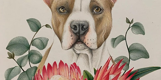 Animal Portraits in Colour Pencil