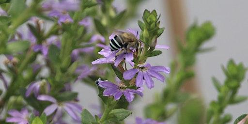 Native Bees Workshop