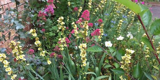 Free Talk: Wilding your Kingsdown Garden