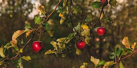 Backyard Orchards Course / Cwrs Perllannau'r Iard Gefn tickets