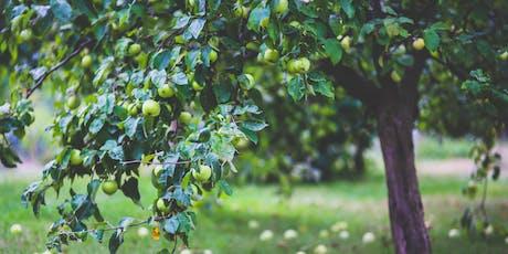 Grafting Fruit Trees Course / Cwrs Impio Coed Ffrwythau tickets