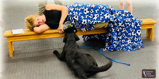 Introduction to Service Dog Training