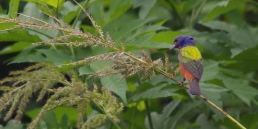 Bird Feeding with a Twist