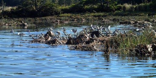 Birds on the Estuary