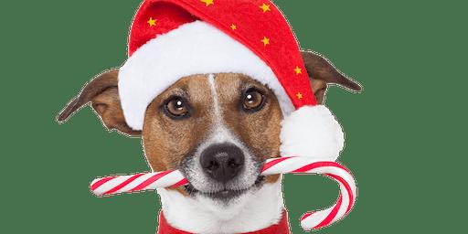 Santa Pet Nights at Hillsdale Shopping Center