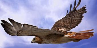 Introduction to Hawks of the Skagit Lecture