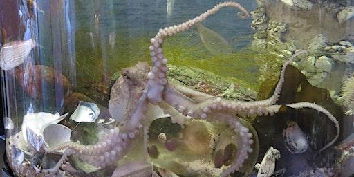 Octopus Adventures: Mini Explorers (ages 3-5)
