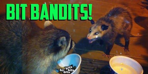 Bit Bandits!