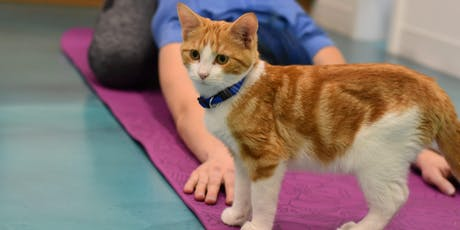 Cats & Yoga - Multiple Dates tickets