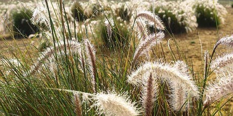 MMeets—CERES presents 'Indigenous Plants & Bush Tucker' tickets