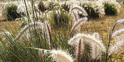 MMeets—CERES presents 'Indigenous Plants & Bush Tucker'