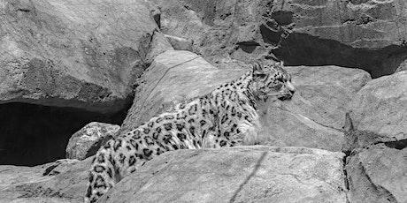 Snow Leopard Encounters tickets