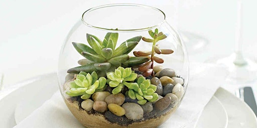 Wine & Design: Terrarium Workshop