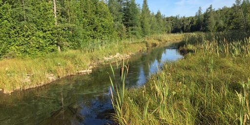Improving the Health of the Rocky Saugeen: A Year in Review