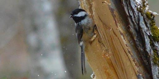 November Monthly Bird Walk