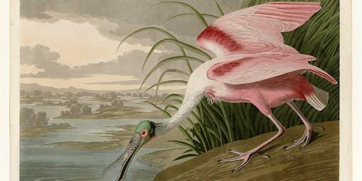 Audubon is coming to Jacksonville! Purchase Audubon originals & fine art.