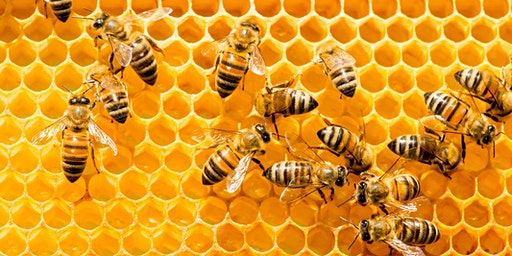 Beekeeping, the Hive and the Honeybee