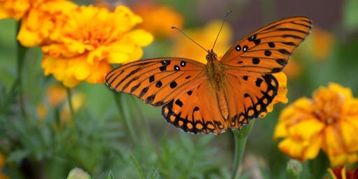 Butterfly Garden Design Basics