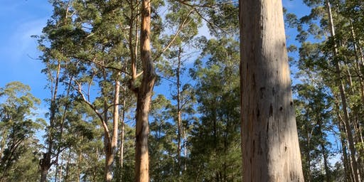 Environment Matters: How can WA's Native Forest help solve Climate Change?