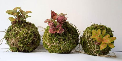 Make a kokedama gift for Christmas