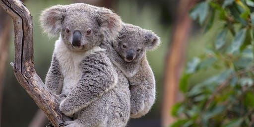 Celebrating 25 years of Koala Beach Estate