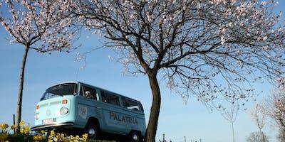Mandelblütenfahrt im VW-Oldtimerbulli