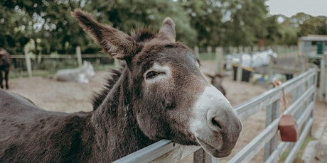 The Donkey Sanctuary Christmas Open Day - Saturday 14 December 2019 - BOOK YOUR PARKING SPACE tickets