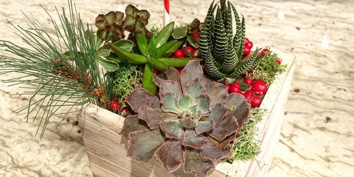 Succulent Holiday Centerpiece Workshop
