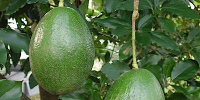 Produce Safety Alliance Avocado Grower Training Course - Homestead