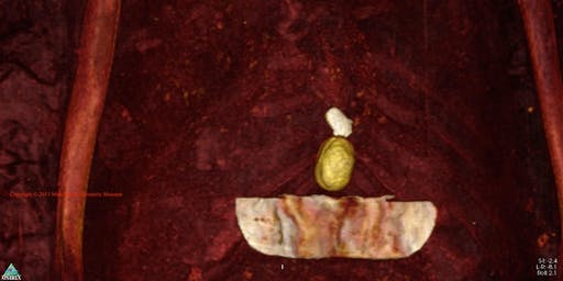 Wakefield Museum Talk: Modern Science - Ancient Craft: The Mummification of Perenbast with Dr. Robert Loynes - Adults 18+