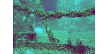 Diving Algarve (2019-12-10 starts at 8:30 AM) tickets