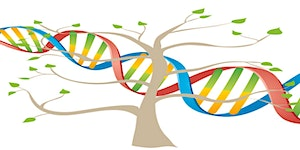 Getting Started With DNA and Using it for Brick Walls