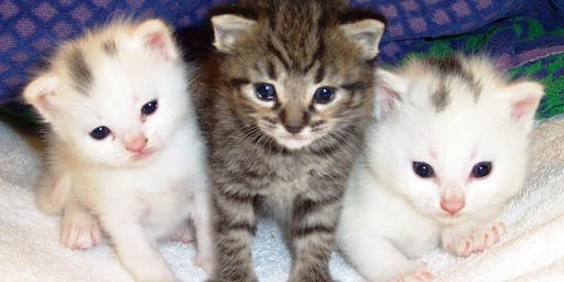 Peninsula Humane Society – SPCA Pop Up Store at Hillsdale Shopping Center