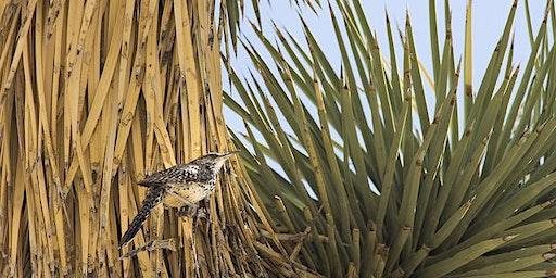 Birds of Joshua Tree National Park Spring 2020 (Biology X404, 1 Unit)