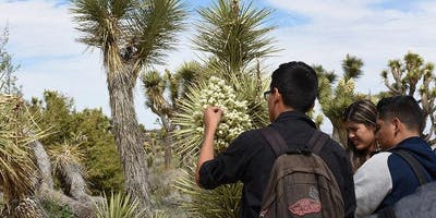 Citizen Science: Phenological Monitoring in Joshua Tree National Park Spring 2020 (Biology x413 1 unit)