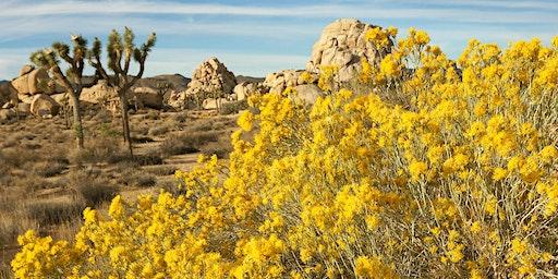 Flora of Joshua Tree National Park Spring 2020 (Botany X420.5, 1.5 units)