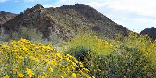 Wildflower Wanderings April 2020