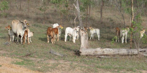 Beef Industry Lunch - Realising 'natural' potential