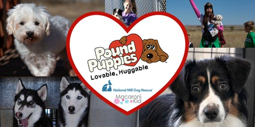 Pound Puppies Pound Party With Macaroni Kid & National Mill Dog Rescue