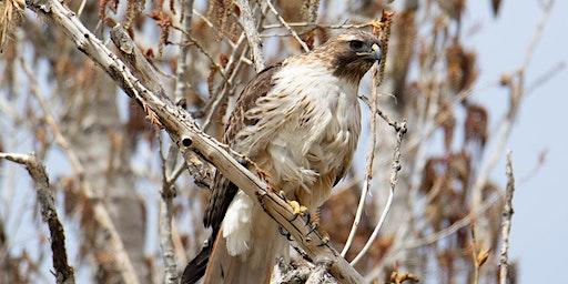 Exploring the Secretive Life of Birds of Prey