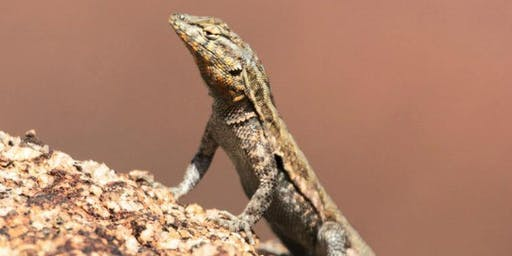 Snakes and Lizards - What Is the Difference?
