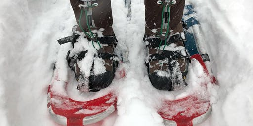Snowshoe At Lookout Mountain