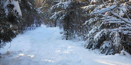 Snowshoe at Benson Lake