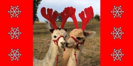 Christmas Alpaca Selfies