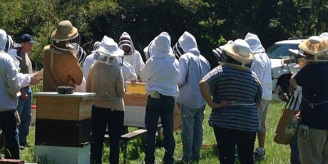 Beginner Beekeeper Class 2020 Saturday track tickets