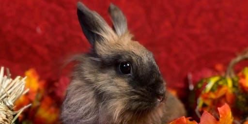 Holiday Bunny Photos at Domino Veterinary Hospital