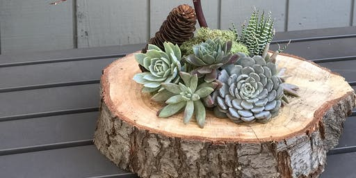 DIY Holiday Succulent Centerpiece Workshop