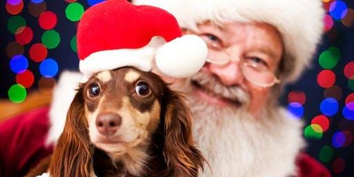 Santa's Pet Photos